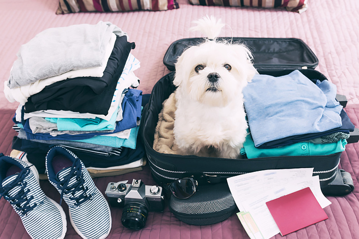 A Maltese dog sitting in a piece of open baggage atop some clothes, ready to go on a trip